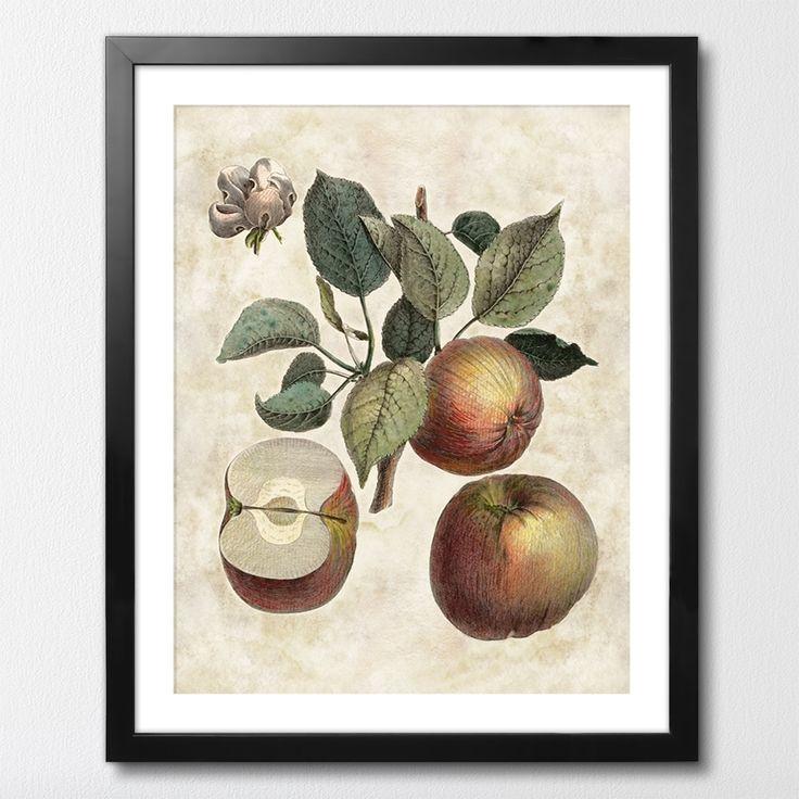 POMONA GALLICA MIXGALLERY vintage,apple tree,wallart,canvas,canvas print,home decor, wall,framed prints,framed canvas,artwork,art