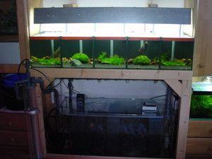 Aufbau Einer Garnelen Zuchtanlage Aquarium Technik Und
