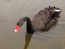 El cisne negro, el impacto de lo altamente improbable. El pasado no puede utilizare para predecir el futuro??