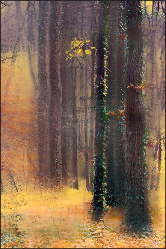 Profusion of Autumn Tints