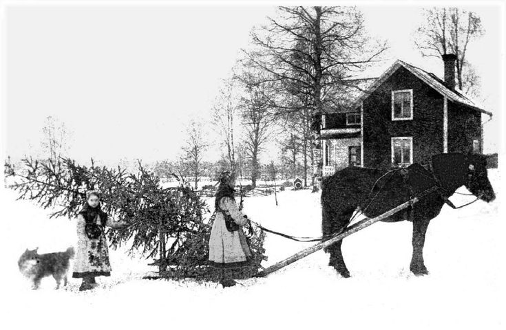 antique-photo-children-horse-sled-with-christmas-tree
