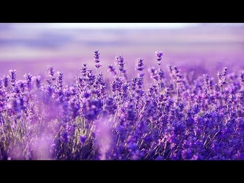 Relaxing Harp Music: Stress Relief, Sleep, Meditation, Spa | Instrumental Background Music ★53 - YouTube