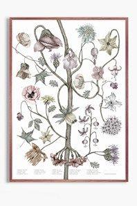 Blomsterkarta är en botanisk poster illustreradav Jonna Fransson. Motivet är tryckt på det obestrukna pappretMunken Polar Rough, ytvikt150 g. Storleken är50 x 70 cm och passar istandardramar. Signerad av Jonna Fransson.Levereras i papprör. Ramen ingår ej.