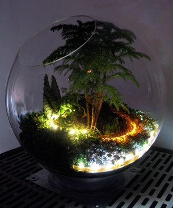 Add some lights to your terrarium to give it a unique look that everyone will love. #PlantNite