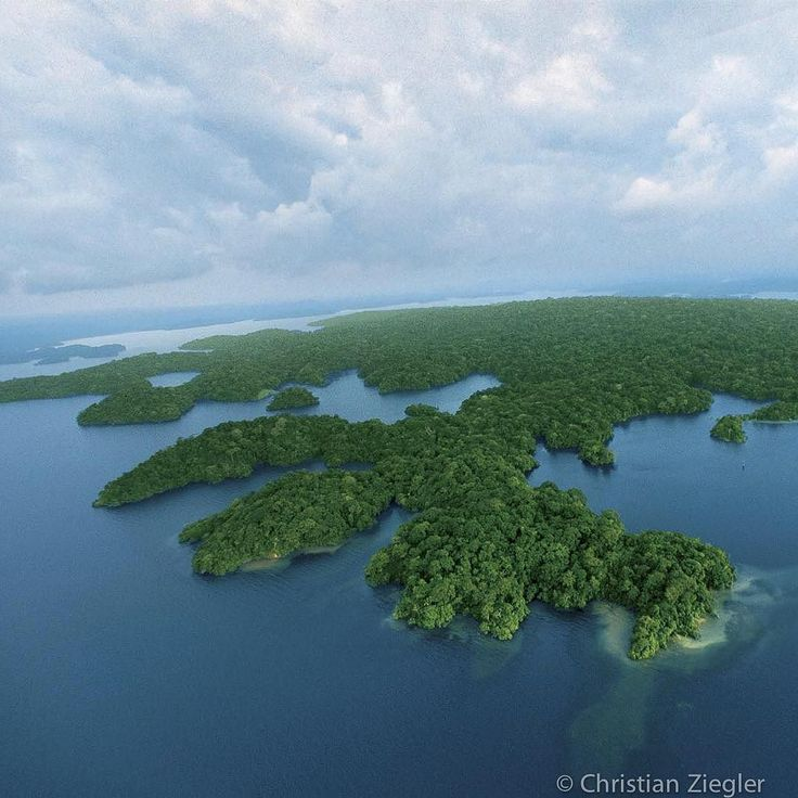 Photograph taken by @christianziegler . Green amoeba. Barro Colorado Island (BCI) an island in Panamas Lake Gatun is the principle field station of the Smithsonian Tropical Research Institute and arguably the oldest field station in a tropical forest having operated since 1928. Since then more then 6000 scientific publications about BCI have been published many of which are the foundations of modern tropical biology. Today BCI sports housing facilities and laboratories for more then 60…
