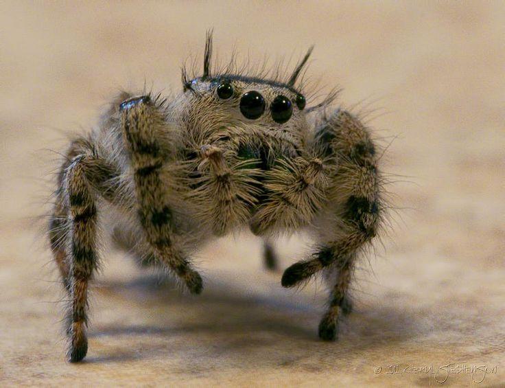 halloween dog spider costume video