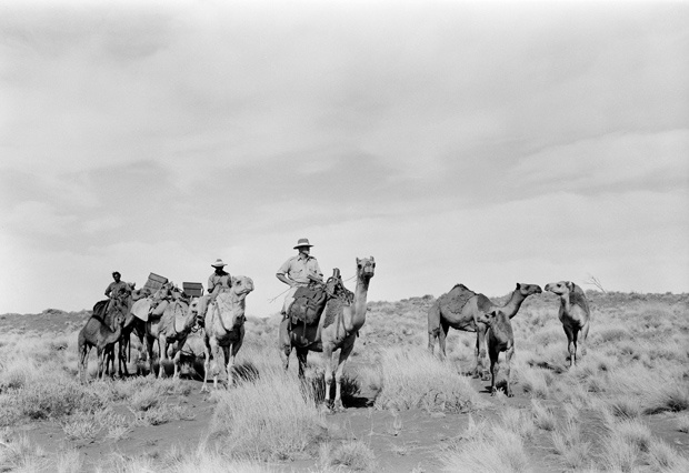 Constable Ron Brown (centre) was a camel patrolman, an officer-in-charge of the Finke Police Station in Australia's Northern Territory. His 'beat' touched the borders of three states: South Australia, Western Australia and Queensland. It would typically take him three or four months to complete his annual patrol.                                       	Photo Credit: National Archives of Australia