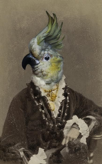 """Untitled by British artist, photographer & writer Charlotte Cory (b.1956) """"best known for her Visitoriana - a complete, fantastical, wholly convincing alternative 19th Century. A post-Darwinian universe of reworked, recycled, collaged and montaged Victorian photography and taxidermy in which the animals are clearly in charge."""" Text from the artist's bio on her site. via Body of Art"""