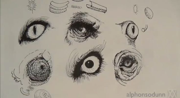 How To Draw Animal Eyes – Video