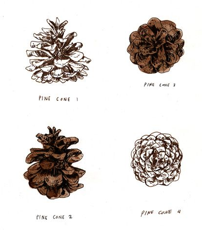 1000 images about pine tattoo on pinterest alex tabuns for Things to make with fir cones