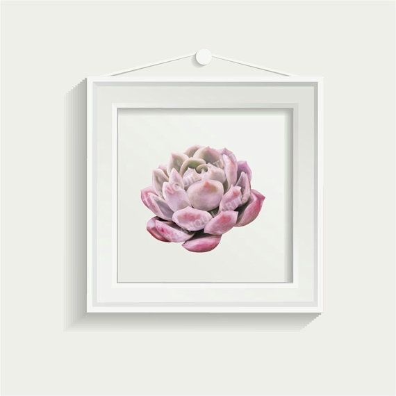 Succulent Digital Painting Pink by TranquilArtist on Etsy