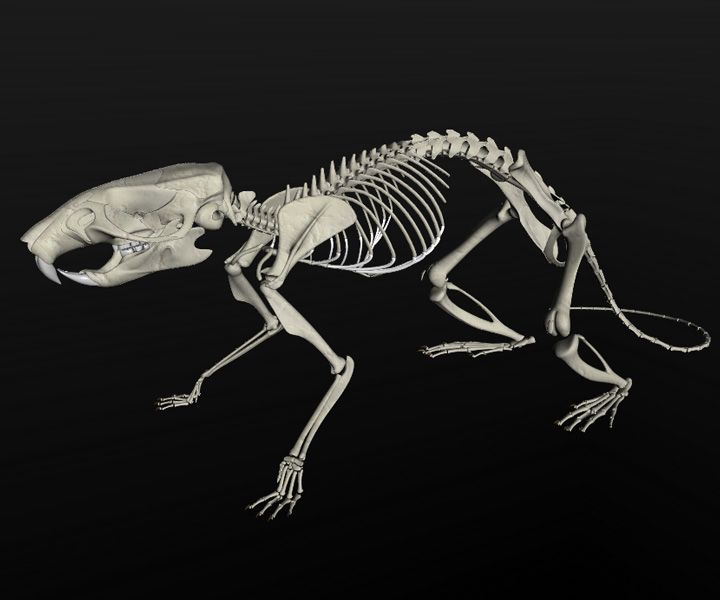 The 335 Best 3d Modeling Ii Images On Pinterest Rats Hairless