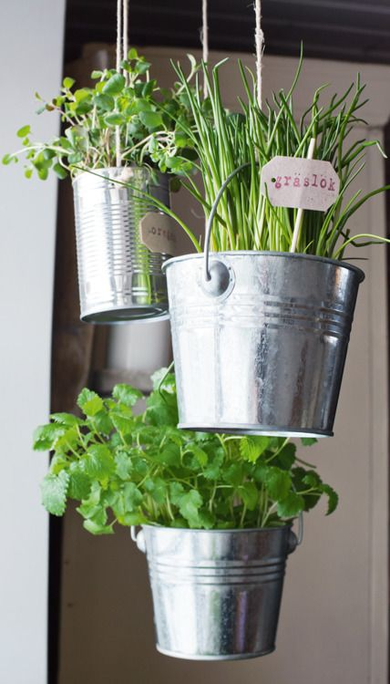 Herbs in hanging tin cans/buckets