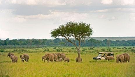 Masai Mara game drive