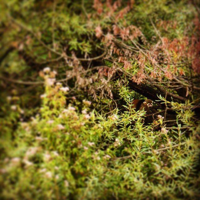 #green #grass #trees #environement #nature #instanature #landscape #scimmia #monkey #hidden #alberi #wood #bosco #variety #intreccio #forest #zoo #novellaorchidea #novella #orchidea #raccontierotici #racconti #ebook #ricardo #tronconi #eroticnovel