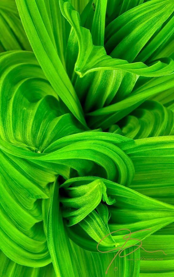 ~~Wavy Green by Jeff Sinon~~