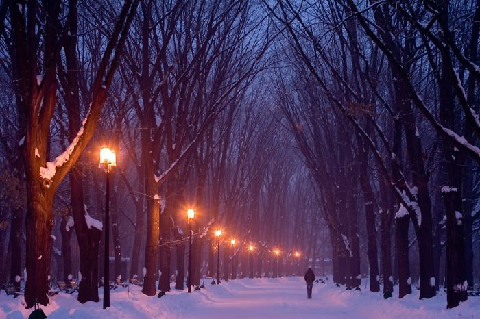 29 Of The World's Most Beautiful Tree-Lined Streets.