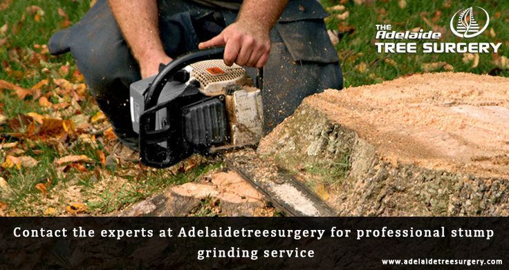 Tree Removal Adelaide - The Adelaide Tree Surgery offers best Tree removal service by highly experienced professional tree cutter in Adelaide, SA. Contact Now!