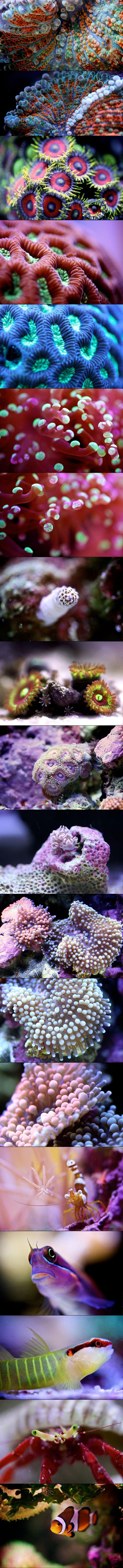 MACRO REEF DWELLERS: A RETROSPECTIVE by Felix Salazar #LostOcean Colour palette inspiration!
