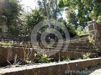 Uphill stone steps ingrowing flowers