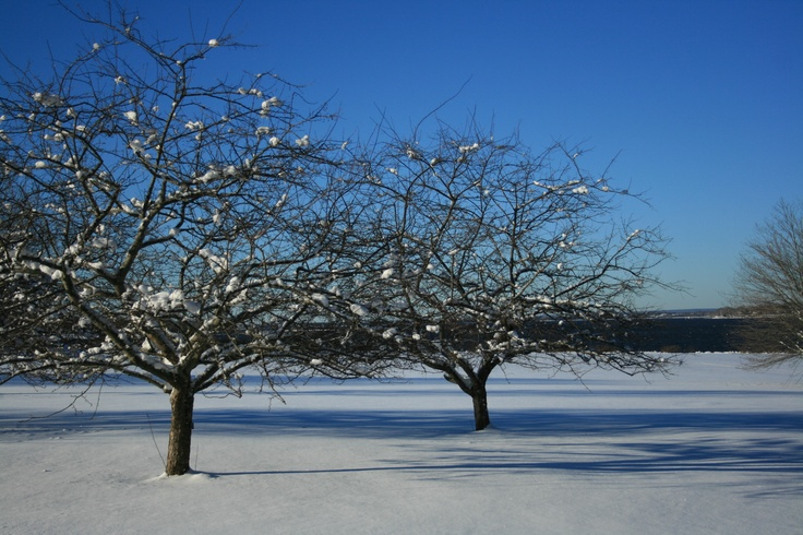 Winter Wonderland view of the Great Lawn