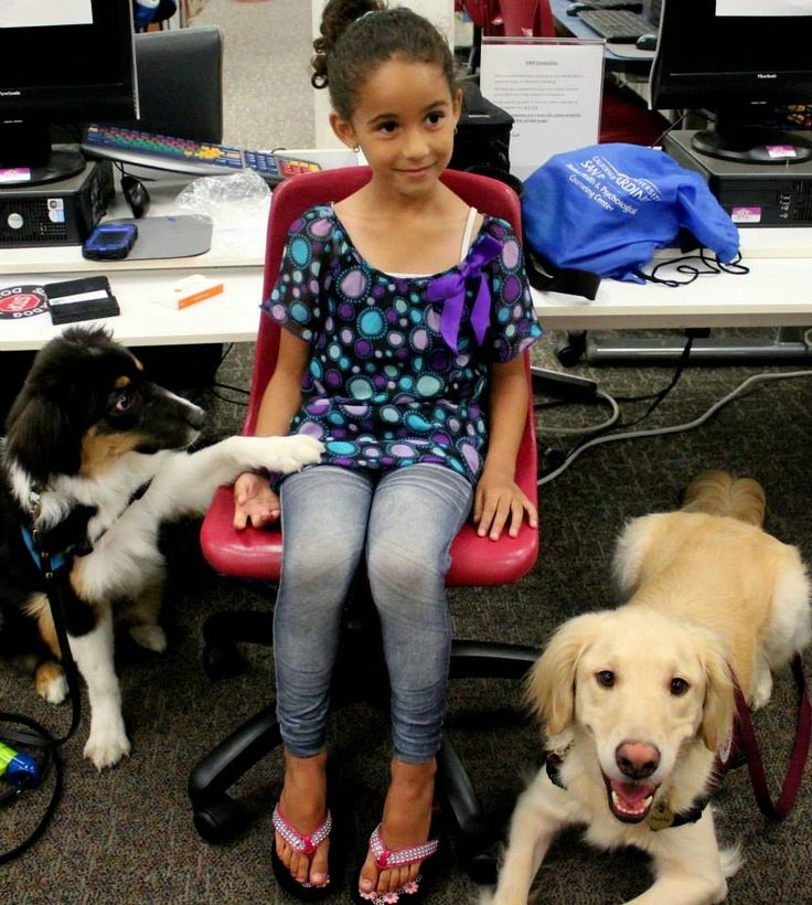 DADs (diabetic alert dogs) for Dummies: You want a DAD? 4 simple points to consider.