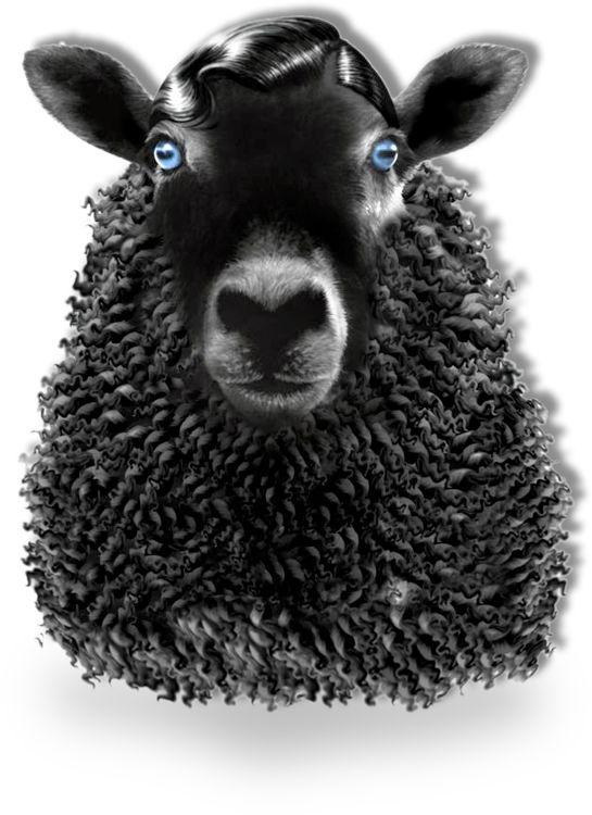 Black Sheep Films - Fernando Livschitz
