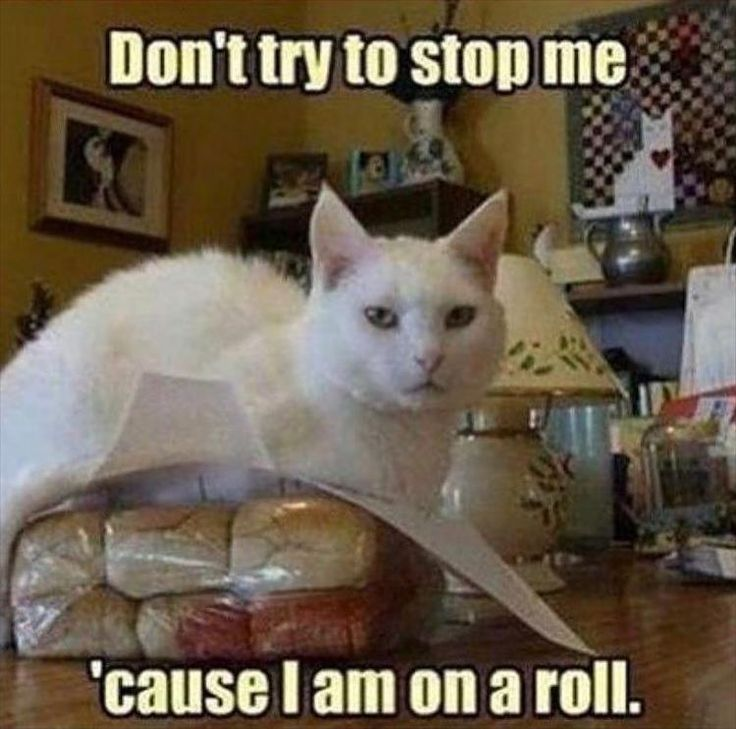 21 Funny Animal Pictures for Today