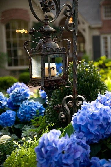 lantern, hydrangeas