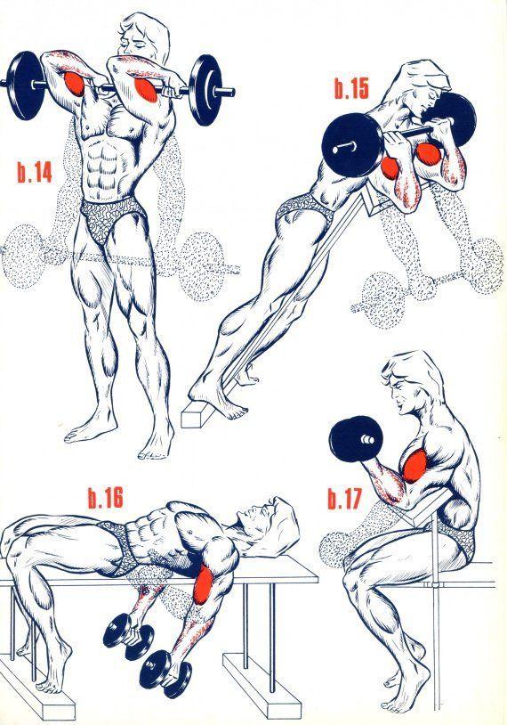 Biceps3                                                       …