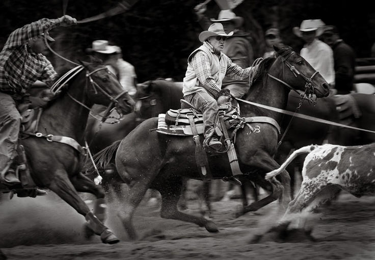109 Best Team Roping Images On Pinterest King George