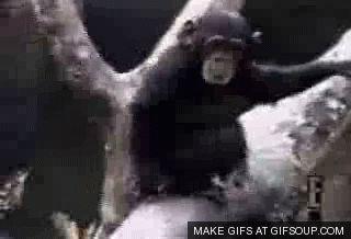 Monkey Pics Animals Giff #8081 - Funny Monkey Giffs  Funny Giffs  Monkey Giffs