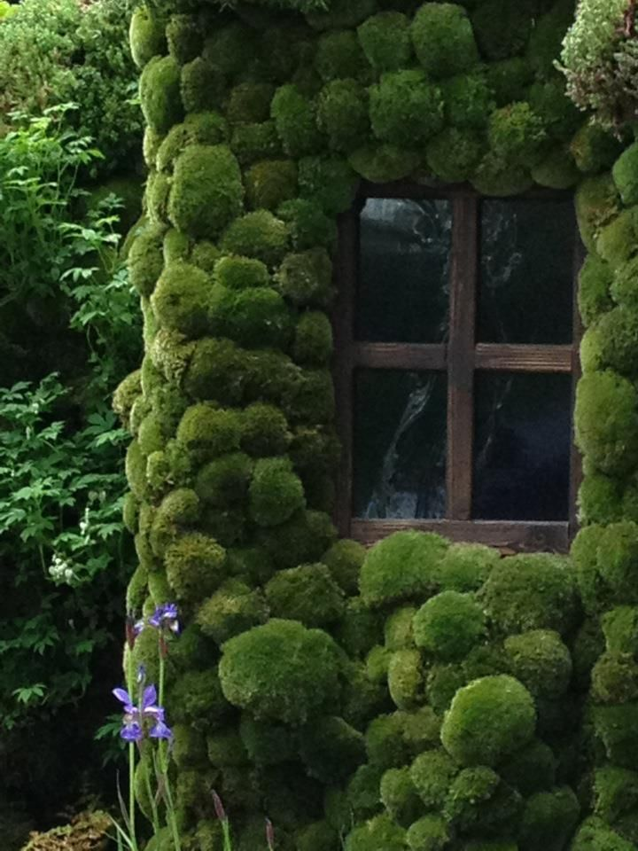 moss covered cottage window