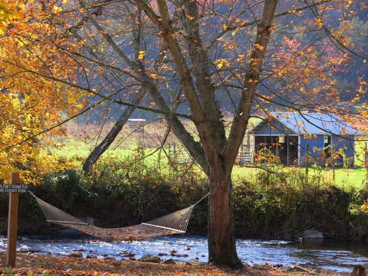 It is gorgeous in the fall at Mountain Springs Cabin! #rvcoutdoors #mountainsprings #hammock #relax #fall