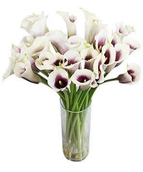 Love the purple on the INSIDE!: Favorite Flowers, Cream Calla, Wedding Ideas, Wedding Flowers, Purple Calla Lilies, Calla Lily, Calla Lillies