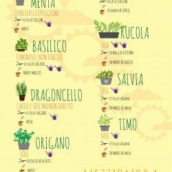 Sole o mezz'ombra? Dove posizionare le piante e come accudirle per avere un piccolo orto in balcone. #orto, #piante #erbe #infographic #infografica