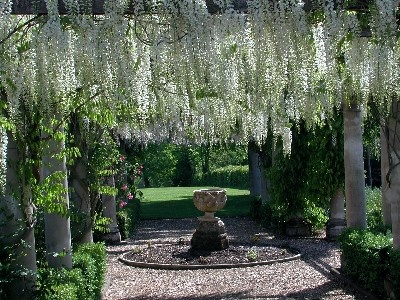 White Wisteria Walk In A Formal Garden