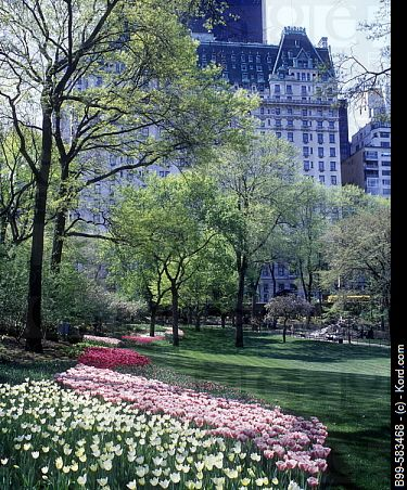 Central Park in spring, NYC