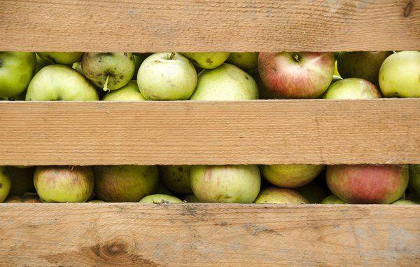 Bolius: Sådan undgår du sygdomme på æbler