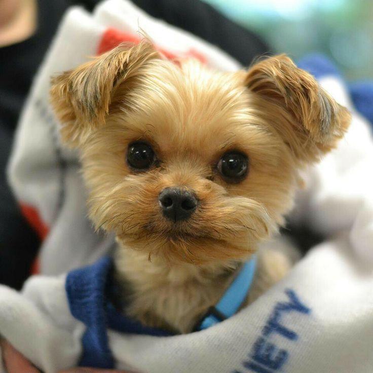Looks like a stuffed animal toy! | Cute Dogs