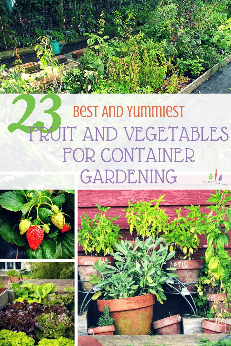 Top 30 stunning low budget diy garden pots and containers 187 home - 23 Of The Best Fruit Vegetables For Container Gardening
