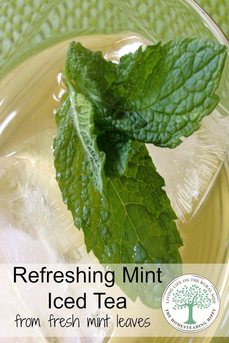 Need a refreshing drink in the heat of the summer?  While your mint is growing all over the place, pick some leaves and whip up a batch of this refreshing iced tea! The Homesteading Hippy