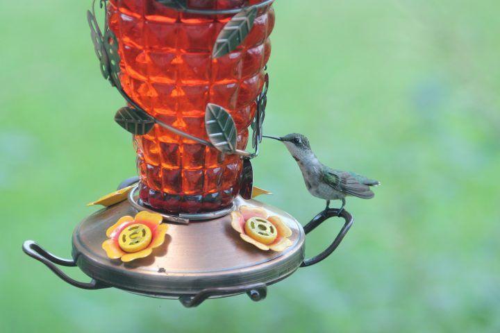 How to keep bees away from hummingbird feeders humming