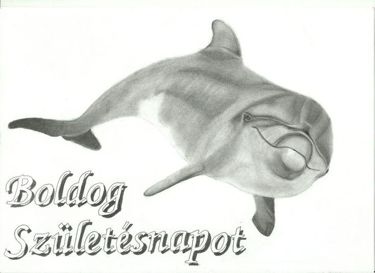 Kockart /// Andulino - Delfin 2