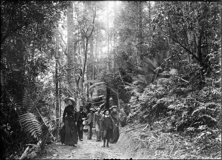 Thomas J. Nevin   Tasmanian Photographer: Cascades