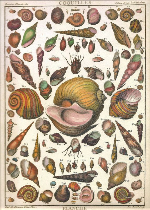 Shells illustration by Antoine-Joseph Dezallier d'Argenville (1680–1765), from his La Conchyliologie, ou Histoire Naturelle des Coquilles de Mer, d'Eau Douce, Terrestres et Fossiles. Published in Paris, 1780. Hand-coloured engraving http://www.libri.it/dezallier-conchology