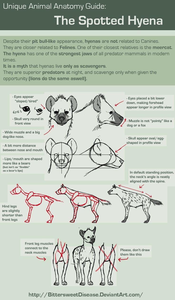 Unique Animal Anatomy: Spotted Hyena by =FOERVRAENGD on deviantART