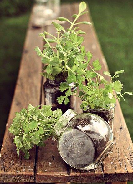 Vidros de diferentes formatos viram vasos para ervas. Elas  não vão durar para sempre, mas certamente ficarão fresquinhas  por mais tempo do que se estivessem na geladeira