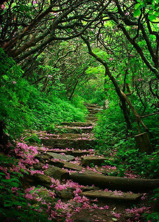 "coiour-my-world: "" Craggy Gardens, Blue Ridge Parkway, North Carolina """