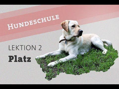Hund Befehl PLATZ beibringen Welpe Video Kommando deutsch Hundetraining ...